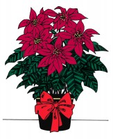 poinsettias1